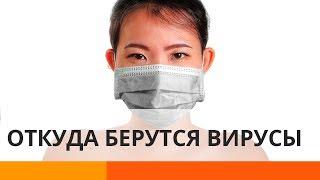 Коронавирус и не только: откуда берутся смертельные вирусы?