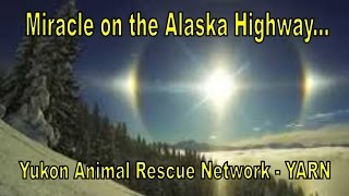 Miracle on the Alaska Highway, 10 Dogs Saved - Please Share