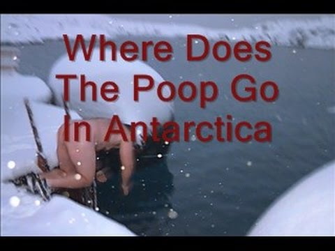 Where does the Poop go in Antarctica