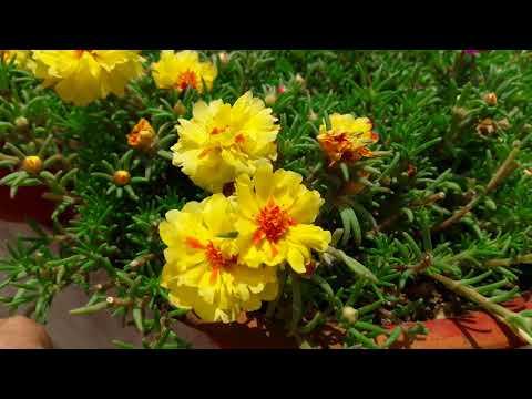 Best Gardening Tips for Beginners || Most Important Gardening Tips || बागवानी की महत्वपूर्ण जानकारी
