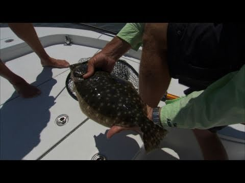 St Augustine Florida Fishing For Cobia Redfish And Flounder