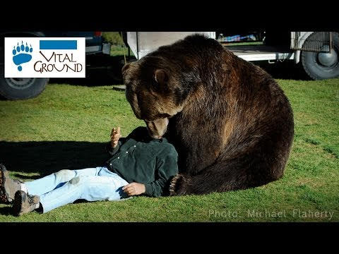 Massive Grizzly Bear!