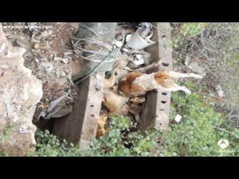 Rescatan perros muertos y malheridos de un barranco de Arona