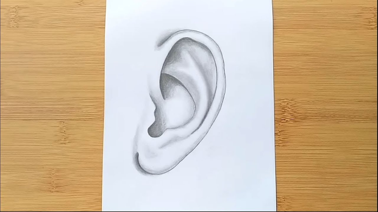 It's just a graphic of Tactueux Ear Drawing Simple