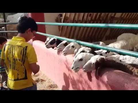 Fun in Arabian Wildlife Center Sharjah
