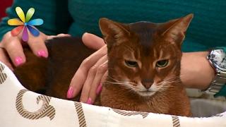 Вы и не подозревали, чего на самом деле боятся ваши кошки! – Все буде добре. Выпуск 960 от 02.02.17(, 2017-02-02T14:00:02.000Z)