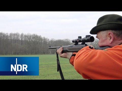 Wildschweinalarm im Norden | DIE REPORTAGE | NDR