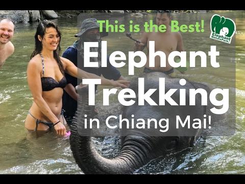 Elephant Trekking in Chiang Mai, Thailand