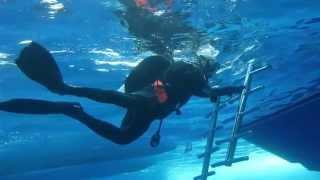 Подводное фото морских обитателей