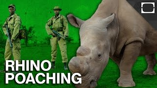 Why This Rhino Needs Armed Guards