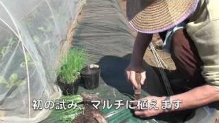 Zapętlaj ファミリー農園110319 | 福田俊