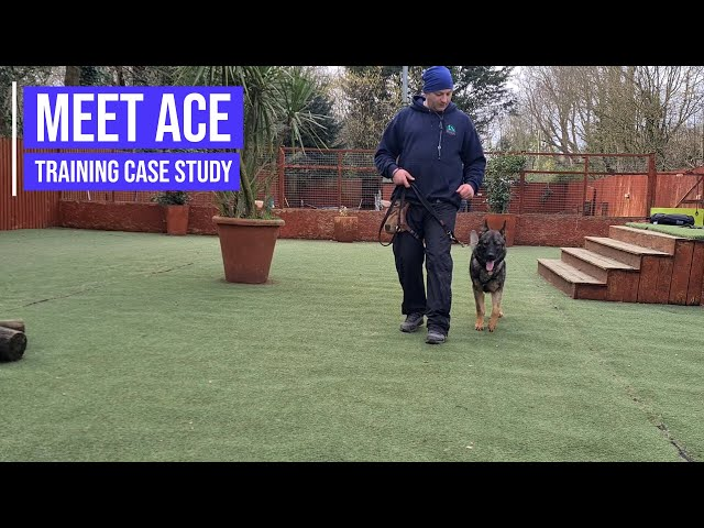 Socialising a German Shepherd with reactivity issues