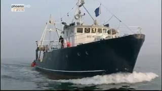 Tod in der Ostsee - Der Untergang der Steuben (Doku HD)