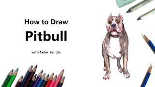 How to Draw a Pitbull with Color Pencils [Time Lapse]