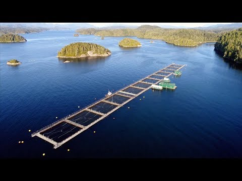B.C. Fish Farms Decision Looms As Leases Expire