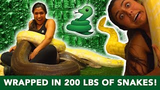 I Wrapped My Entire Body In 200 POUNDS of Snakes! 🐍   (INSANE)