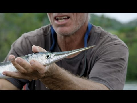 Jeremy Wade Has Some Clever Gear To Help Snag A Needlefish | River Monsters