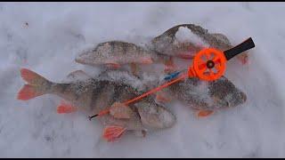 Зимняя рыбалка на Оке Ловля окуня на мормышку Ловля окуня на балансир