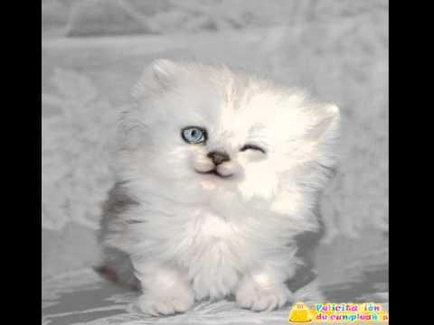 Tarjetas de feliz cumplea�os con gatitos