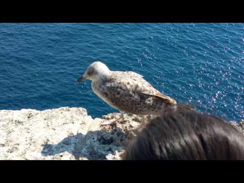 Monaco Garden Bird