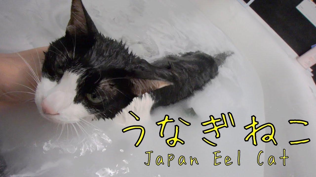 ながぁ~い、うなぎねこ - Wet Long cat is Long -