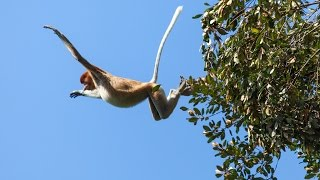 Monkey Jumping On the Street and Tree must watch