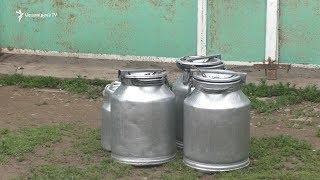 Պրիվոլնոյեի կաթ արտադրողները պայման դրեցին «Աշտարակ կաթի» առաջ