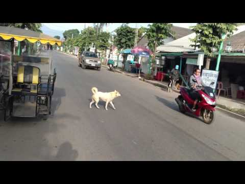 CATS, DOGS and BABIES ON BIKES IN THAILAND