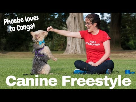 Canine Freestyle Dog Dancing (Gloria Estefan - Conga) - Fluffy Tufts