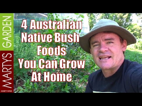 4 Australian Native Bush Foods You Can Grow at Home