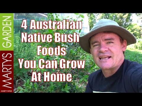4 Australian Native Bush Foods You Can Grow at Home
