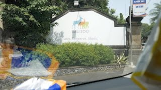 Bali zoo - one of the most amazing zoos ...