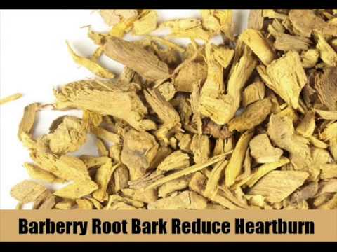 10 Herbal Remedy For Heartburn