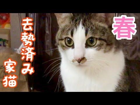春を迎える野良猫たちの実態と、去勢済み家猫の実情の差がなかなか面白い