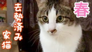 春を迎える野良猫たちの実態と、去勢済み家猫の実情の差がなかなか面白い thumbnail