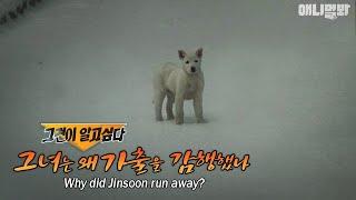 My grandchild-like dog, Jinsoon, ran away.. Please help!