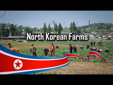 North Korean Farms (May 2014)