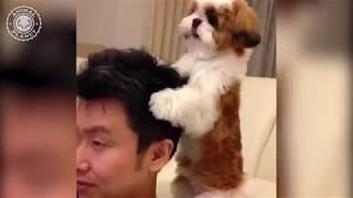 犬, 犬夜叉, 犬夜叉 曲, 犬夜叉 ed, 犬夜叉 パチンコ, 犬山紙子, 犬猫み...
