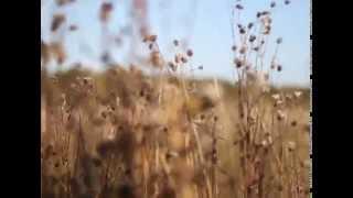 Шым Каста - Романс для Анны (авторский клип)