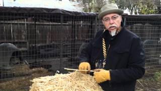 Hay! Hay! Keep Your Dog Warm by Ron Ramos