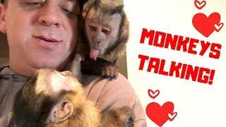 MONKEY LOVE | CUTE VOCAL MONKEYS!