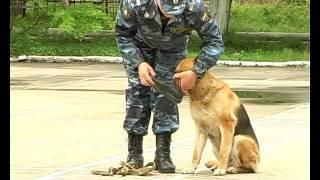Домашний питомец (выпуск 22) (Служебные собаки. Модный приГАВор) (РИА Биробиджан)