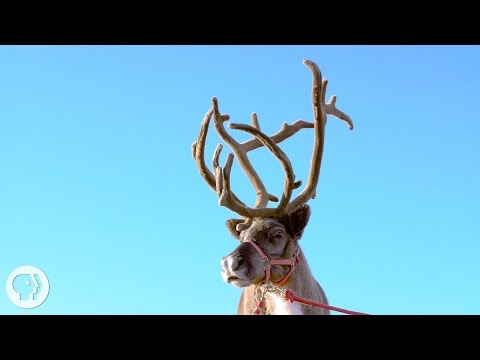 Why Reindeer and Their Cousins are Total Boneheads | Deep Lo