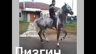 Лезгин Орловский рысак