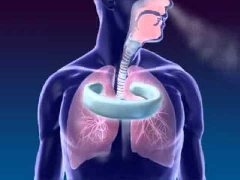 Cử động hô hấp ở người
