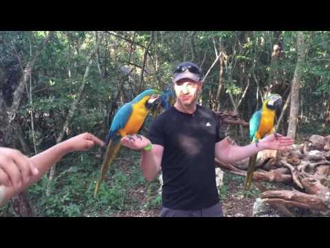 Fun w birds in Akumal