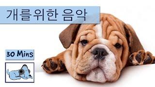 음악은, 당신의 개를 긴장 잠을 당신의 개를 도움