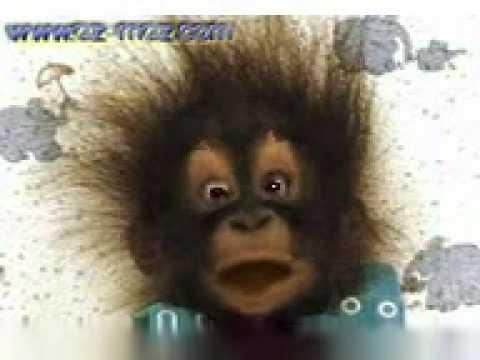 Monkey baby funny bayi monyet lucu  YouTube