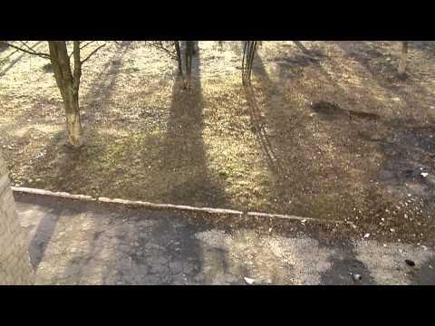 Тест видео на видеокамере Sanyo VPC-GH1 Silver