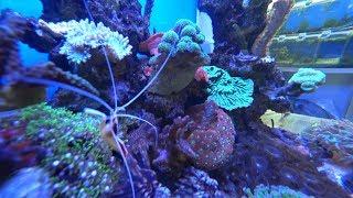 Запуск морского аквариума 30 л. + Обзор морского аквариума 160 л.